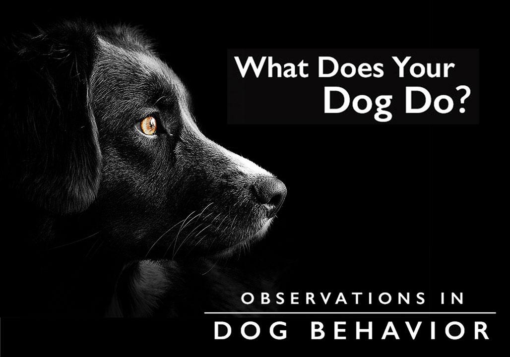 Kepley K9 Dog Behaviors